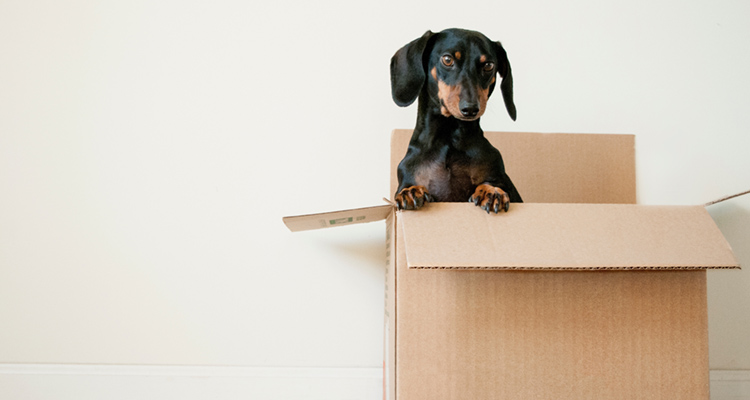 Things To Do When Moving House